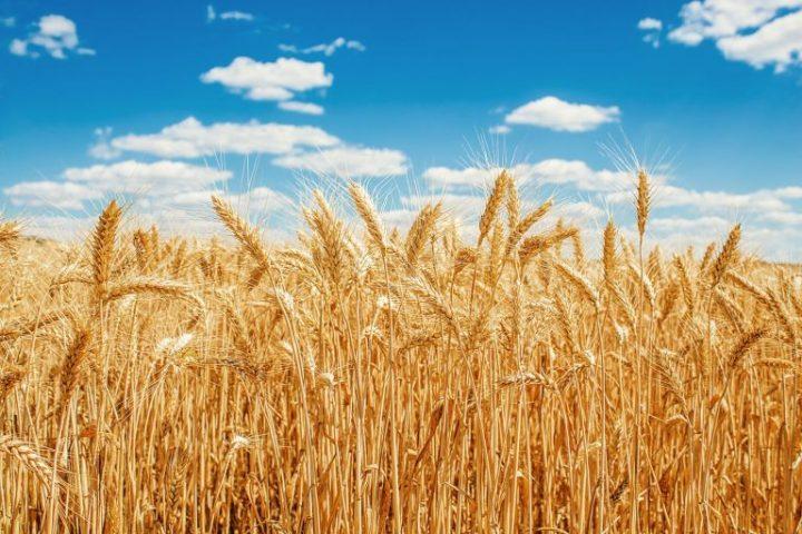 Opriți exporturile de cereale. Măsură de urgență.